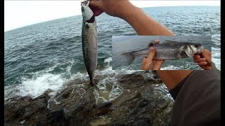 Shore Fishing - SPINNING from the Rocks - Targeting MACKEREL and BASS