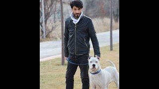 DOGO ARGENTİNO   - ARAS -