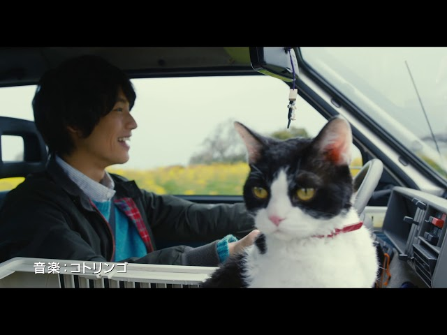 猫の声は高畑充希!福士蒼汰主演『旅猫リポート』特報