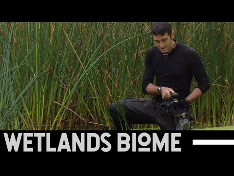 Wetlands Biome - Untamed Science