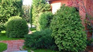 Формирование хвойника(Фигурная стрижка хвойных растений: правила обрезки Предназначение хвойных растений в саду – исключительн..., 2015-03-15T07:03:18.000Z)