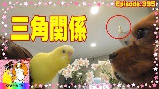 セキセイインコ(ぴーちゃん)⇒キャバリア犬(アン)⇒オカメインコ(エ...