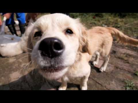 Animals Close-Up With A Wide Angle Lens