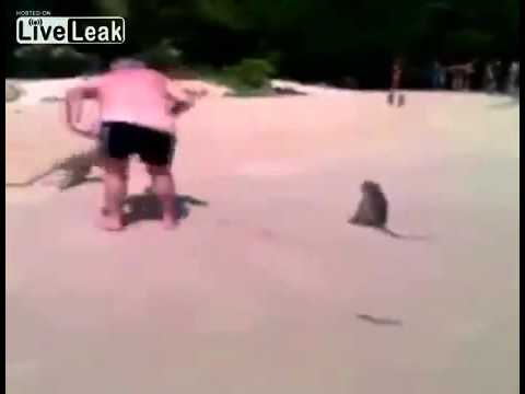 Funny monkey pull down old man's pants