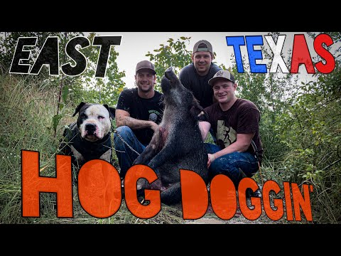 Hog Doggin: A Texas Hog Hunt **Graphic** #hoghunting