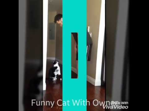 Funny Cat Pretending Like Baby 😁(Cute Cat)
