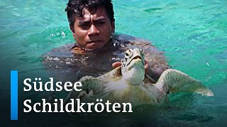 Salomonen: Naturschützerinnen retten Meeresschildkröten | Global Ideas