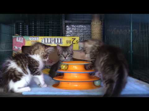 1 Hour of Kitten Therapy!