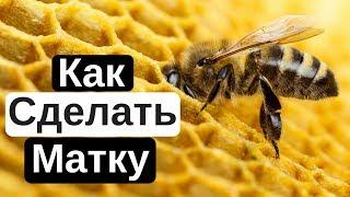Пасека #12 Как вырастить пчелиную королеву ?  Как Сделать Матку ? Пчеловодство для начинающих.