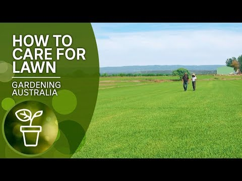 How To Care For Lawn