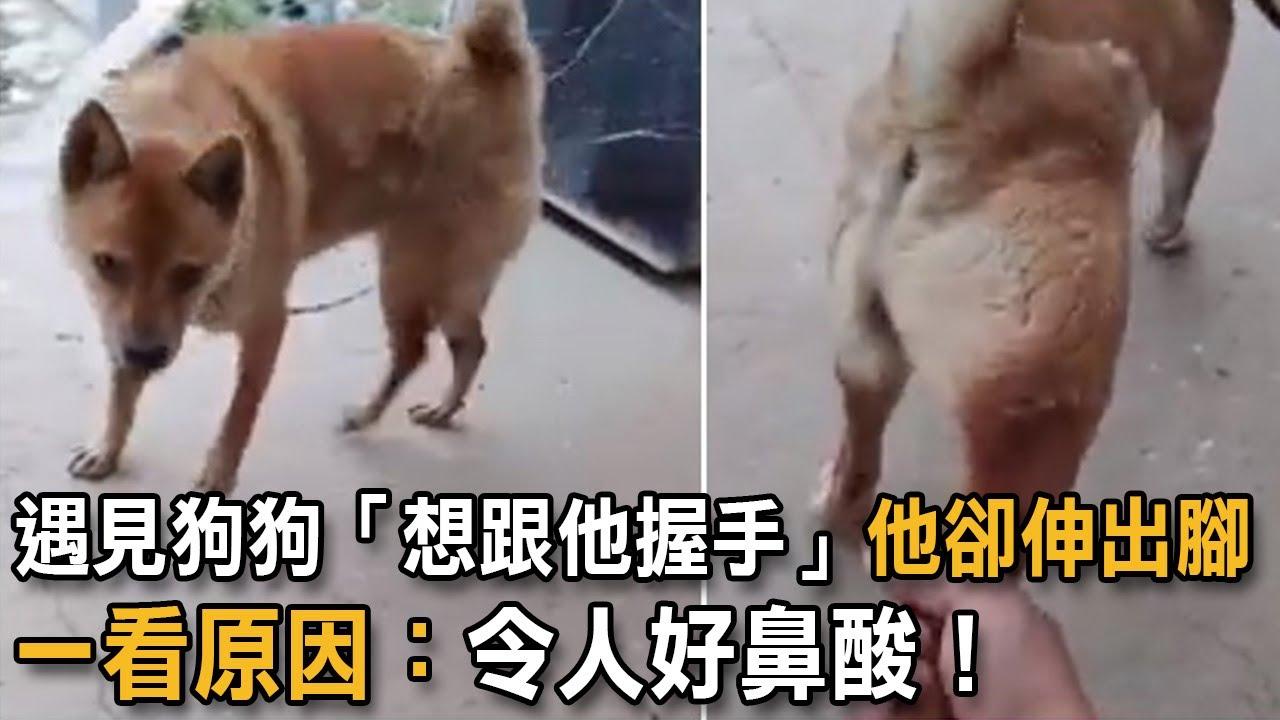 遇見狗狗「想跟他握手」他卻伸出腳 一看原因:令人好鼻酸! 狗狗故事 狗握手