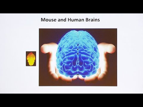 Modeling Human Neurogenetic Diseases in Mouse and Human Induced Pluripotent Stem Cells