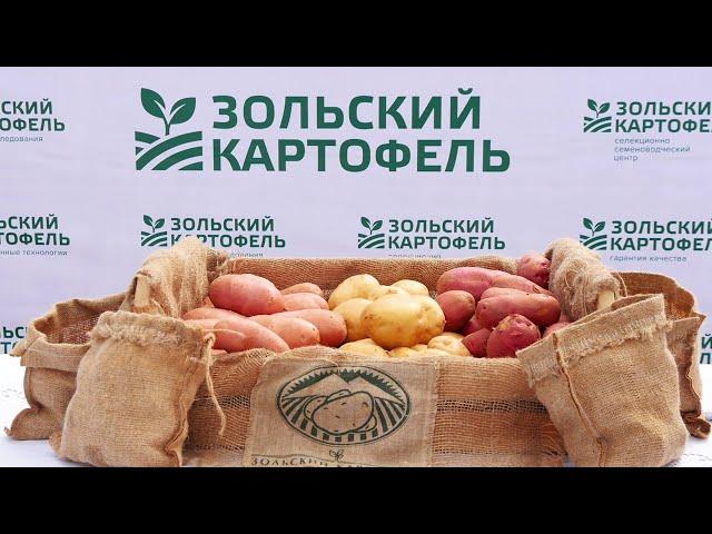 День поля 2020. Зольский картофель