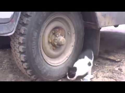 Gerçek Hayatta Tom Ve Jerry