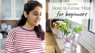 Grow with Me - Mint from Grocery Stems  | Ep 3