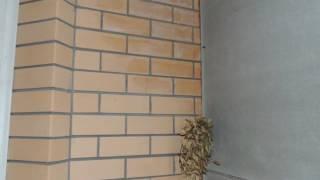 видео Недвижимость г.  Железногорск Курской области