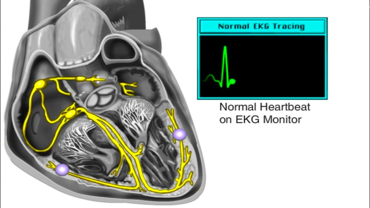 How The Heart Works - Electrical System Of The Heart Animation - Cardiac Conduction Video