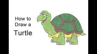 How to Draw a Turtle / Tortoise (Cartoon)