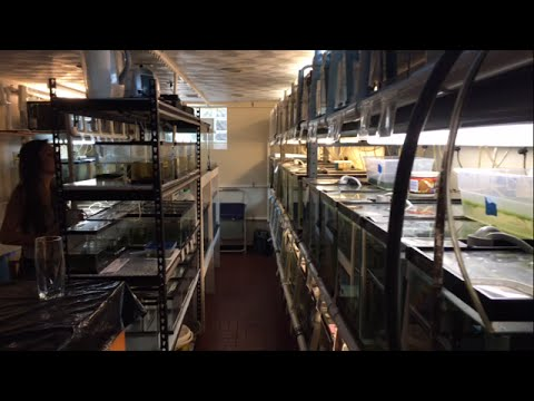 Hobbyist Fish Room Tours: 80+ Aquariums Of Killifish And Others