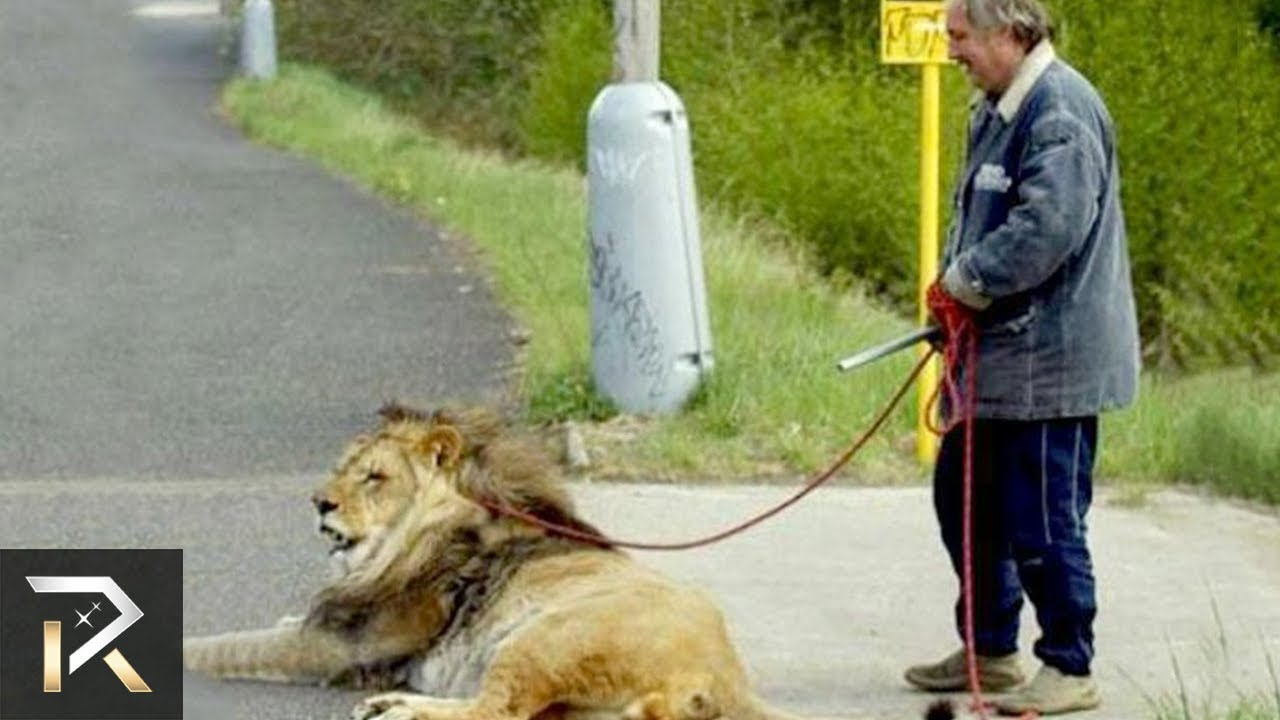 10 EXOTIC Animals People Own As Pets