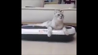 Funny cats #20