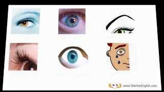 Vocabulario Inglés:  El Cuerpo Humano 1/3  (The Human Body)