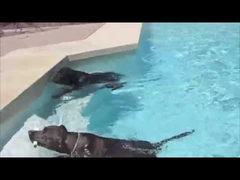 Miller the Rottweiler and Jax the Puppy go swimming!