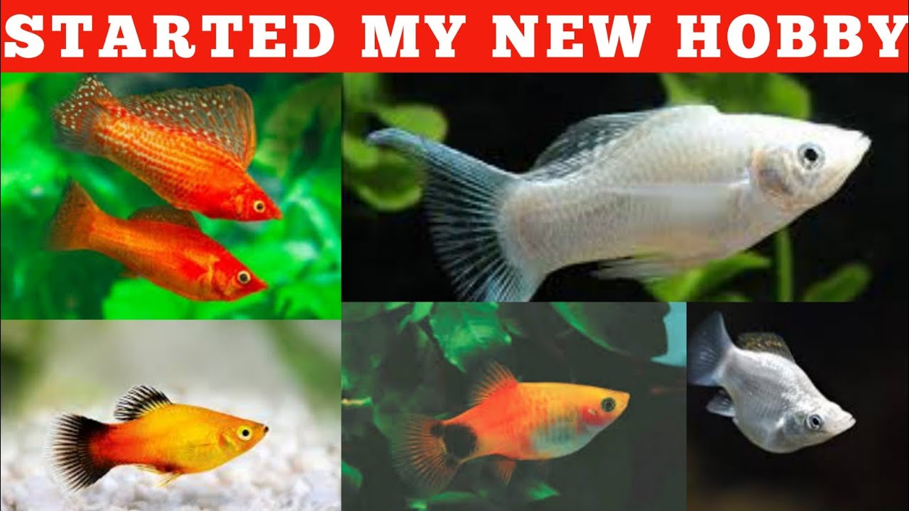 Started fish keeping | My new pet hobby | தமிழில்