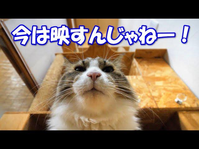 猫部屋に入ったタイミングが悪すぎて、猫達のマル秘シーンを撮影してしまいました‥