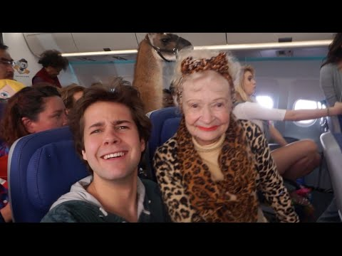 THERE WAS A LLAMA ON MY FLIGHT!! | David Dobrik