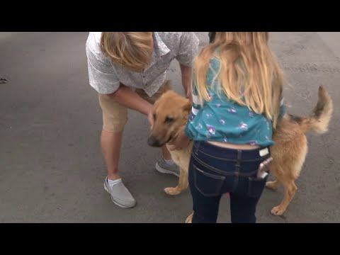 None - TMSG - Dog missing for 2 years reunited with family