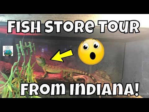 Fish Store Tour From Lafayette, Indiana Aquarium World