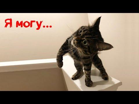 Самый суровый котик мире за 27 декабря