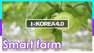 [I-KOREA 4.0 브랜드영상] 스마트팜
