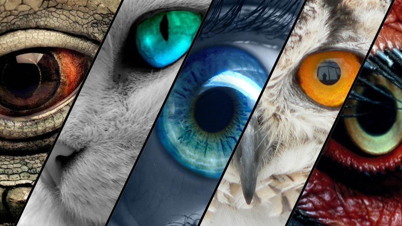 لماذا تختلف أشكال عيون الكائنات الحية ؟