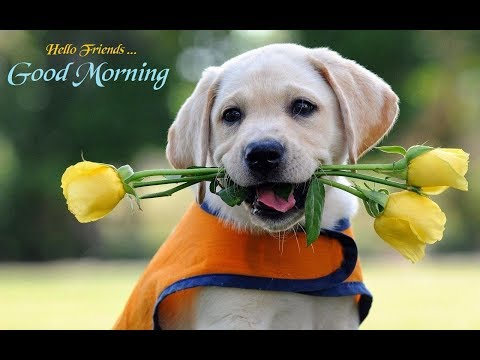 Good Morning Song Tamil Youtube To Mp4 Download Music Video Mp4