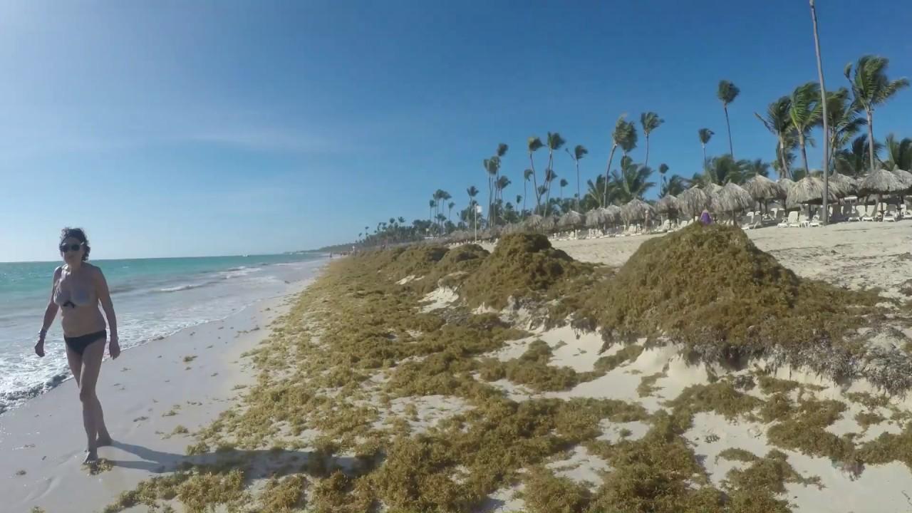 CRAZY HIGH SEA WEED - DOMINICAN REPUBLIC 2018 - BAVARO BEACH - CARIBBEAN  SEA -