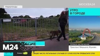 В Нидерландах неизвестные подожгли вышку 5G из-за коронавируса - Москва 24