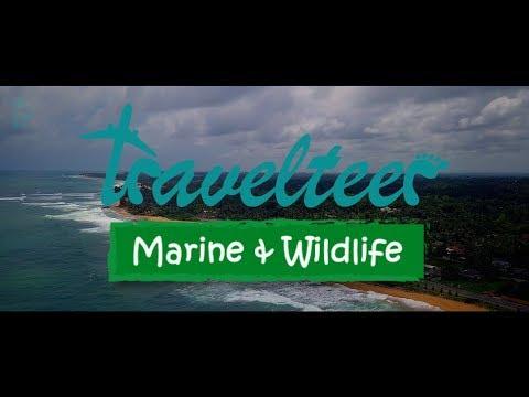 Travelteer   Marine & Wildlife Programme
