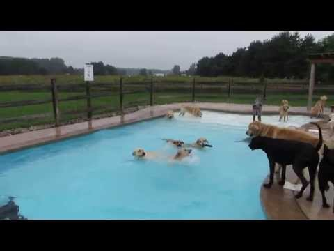 Lucky Puppies Delight in Swimming Pool Pawty