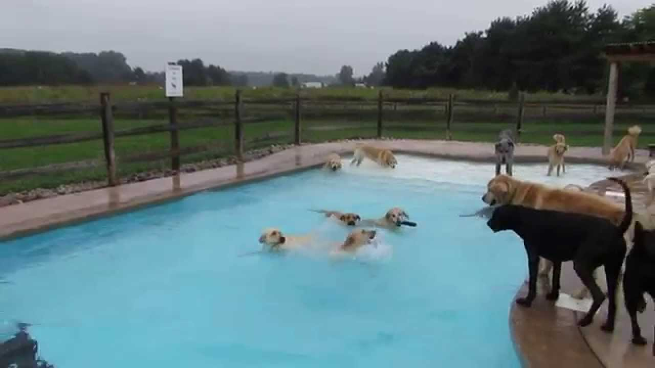 Lucky Puppies Delight In Swimming Pool Pawty Youtube