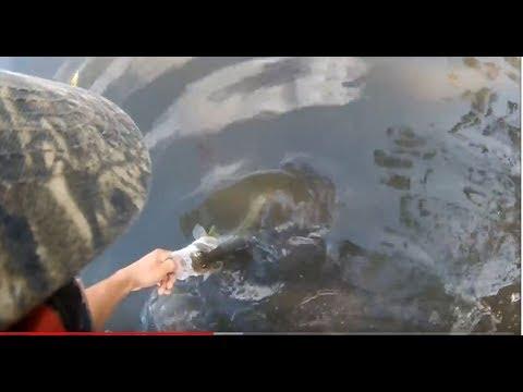 Jupiter Florida Fishing Vlog