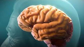 Comprendre la maladie d'Alzheimer (Understanding Alzheimer's Disease)