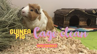 Guinea Pig Cage Clean