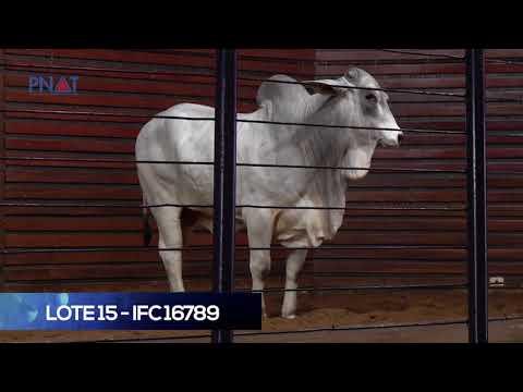 LOTE 15 - IFC 16789 - NELORE