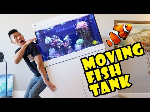 Moving My Fish Tank Into New Home || Extra After College