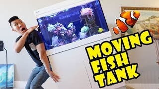 moving-my-fish-tank-into-new-home-extra-after-college