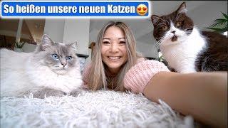 Katzenname zum 2. Mal ändern 🙈 Katzen und Kleinkind! Hund besser als Familien Haustier | Mamiseelen