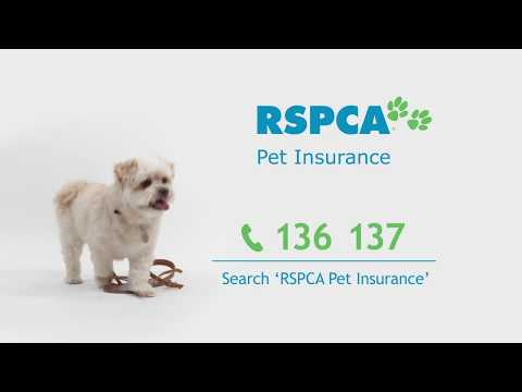 RSPCA Pet Insurance 'Point of View' TVC - 60sec