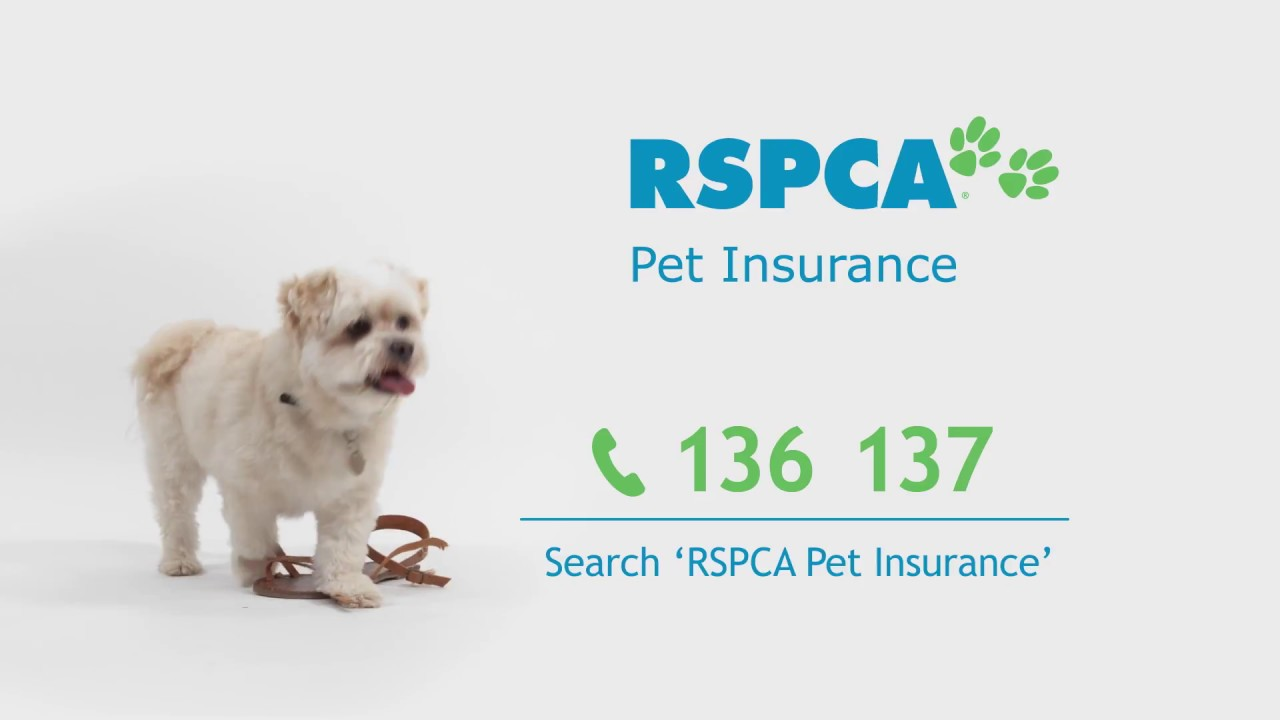 RSPCA Pet Insurance 'Point of View' TVC - 60sec - YouTube